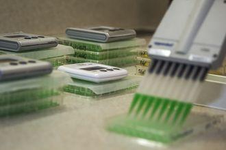 Mikroflora jelitowa – fakty i mity o bakteriach