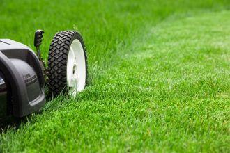 Ogród w symbiozie z naturą – jak dbać o trawnik, by nie naruszać ekosystemu gleby?