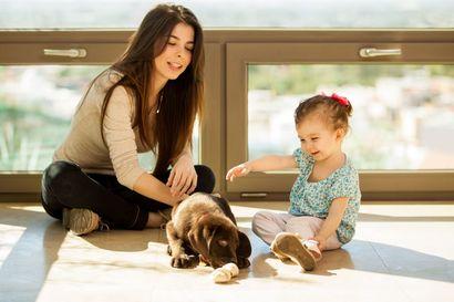 pies-–-przyjaciel-czy-wrog-malego-dziecka
